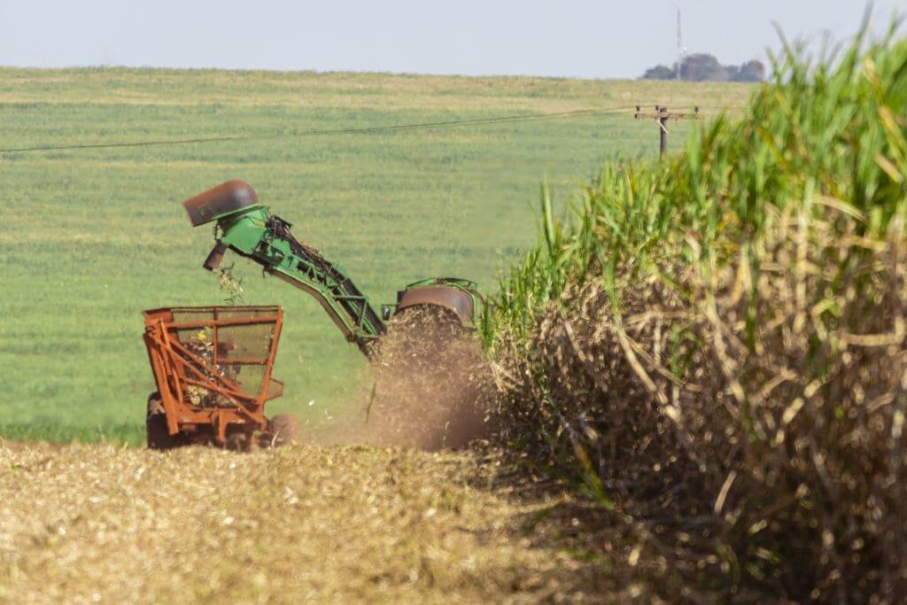 Harvesting sugar cane in a field using a John Deere machine